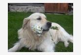 Profil psíka patrí používateľovi Sofi a Charlie
