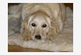 Profil psíka patrí používateľovi sorboni