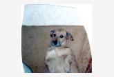 Profil psíka patrí používateľovi Tanja