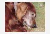Profil psíka patrí používateľovi Terča Planková