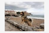 Profil psíka patrí používateľovi Tibetan-Mastiff