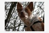 Profil psíka patrí používateľovi Tinka a Šami
