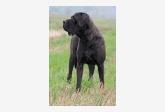 Profil psíka patrí používateľovi tosa inu kennel