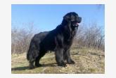 Profil psíka patrí používateľovi Věrča - Pegy