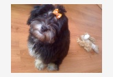 Profil psíka patrí používateľovi Veronika