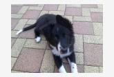 Profil psíka patrí používateľovi Wolfie