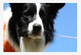 Profil psíka patrí používateľovi zampa