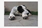 Profil psíka patrí používateľovi Zaridan