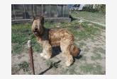 Profil psíka patrí používateľovi Zuzana Martincová