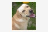 Profil psíka patrí používateľovi Zuzanka