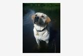 Profil psíka patrí používateľovi zuzlatko