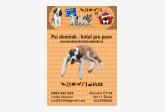 Psí domček - hotel pre psov