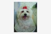 Salón pre psíkov pridal používateľ Evina