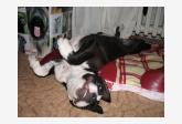 Salón pre psíkov pridal používateľ helga tkacova