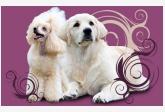 Salón pre psíkov pridal používateľ kajpeto