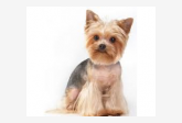 Salón pre psíkov pridal používateľ Marošova Ingrid