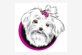 Salón pre psíkov pridal používateľ PET SALON