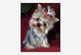 Salón pre psíkov pridal používateľ silvika