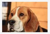 Obrázok používateľa beagles