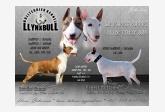 Obrázok používateľa Llynxbull Bullterrier kennel
