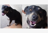 Používateľovi 28kate28 sa stratil psík