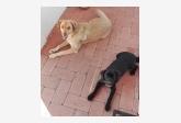 Pippa a Betty