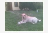 Používateľovi b.andrea sa stratil psík