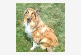 Používateľovi BLANCHER sa stratil psík