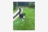Používateľovi BUDCAT sa stratil psík