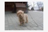 Používateľovi Dominika sa stratil psík