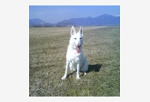 Používateľovi Evika sa stratil psík