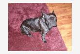 Používateľovi Garniza sa stratil psík