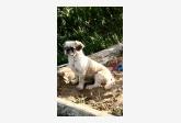 Používateľovi Jana Holková sa stratil psík