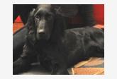 Používateľovi Jana Vasiliaková sa stratil psík