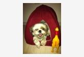 Používateľovi janulka7777 sa stratil psík
