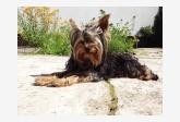 Používateľovi kikagondas sa stratil psík