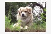 Používateľovi Krajo22sk sa stratil psík