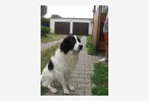 Používateľovi Lucia Harvišová sa stratil psík