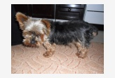 Používateľovi mima7333 sa stratil psík
