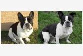 Používateľovi rencsike88 sa stratil psík