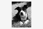 Používateľovi Rxon sa stratil psík