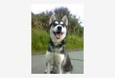 Používateľovi Sally sa stratil psík