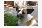 Používateľovi Tinka442 sa stratil psík
