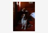 Používateľovi tituslivius sa stratil psík