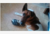 Používateľovi Zuzka Saunders sa stratil psík