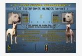 Vrh P - Los Escorpiones Blancos