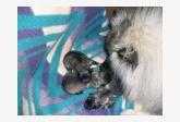 Amálka a její první štěňátka
