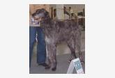Škótsky jelení pes Andrew Bran Irater