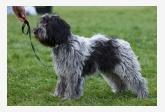 Holandský pastiersky pes FLY BY NIGHT DES UNS ET DES AUTRES
