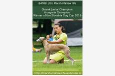 BAMBI LOU Marsh-Mallow life